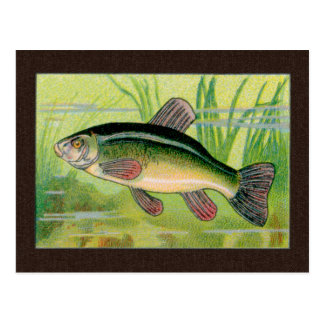 Impresión de los pescados de las tencas del tarjetas postales