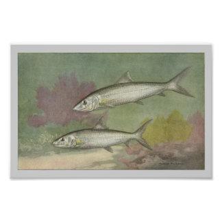 Impresión de los pescados del vintage de los impresion fotografica