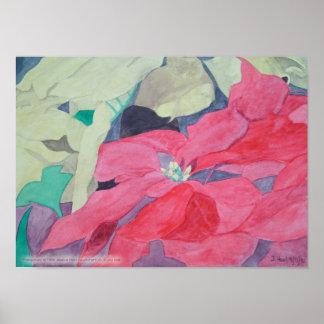 Impresión de los Poinsettias Posters