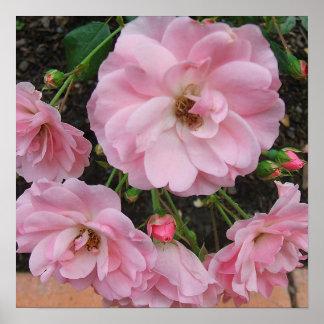 Impresión de los rosas de té