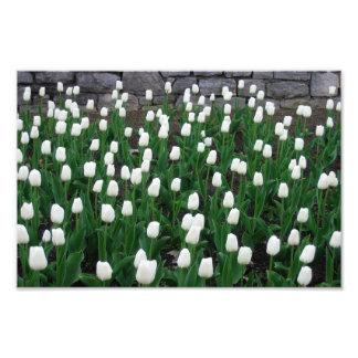 Impresión de los tulipanes 10 arte con fotos