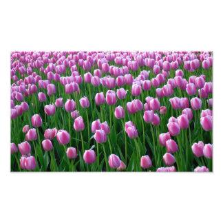 Impresión de los tulipanes 14 arte fotografico