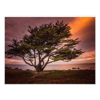 Impresión de Monterey Cypress Fotografía