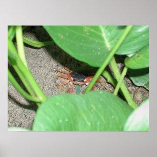 Impresión de ocultación del cangrejo poster