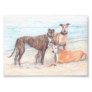 Impresión de Phoo del arte del perro de tres galgo Impresión Fotográfica