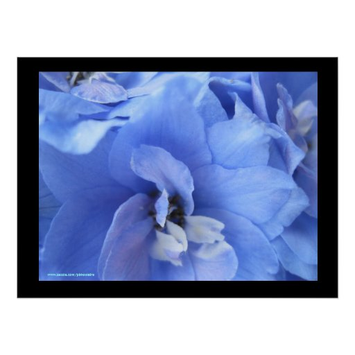 Impresión de Photogaphy de la flor Póster