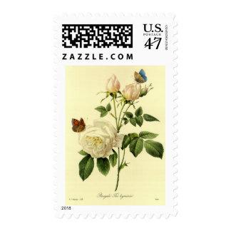 Impresión de Redoute: 'Bengala subió Hymanee Sello Postal