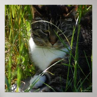 Impresión de relajación del gato