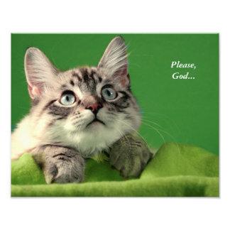 Impresión de rogación del gato siamés fotografías