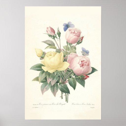 Impresión de Rose du Bengale Canvas Póster