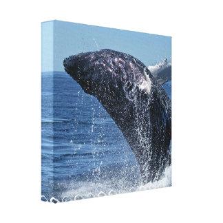 Impresión de salto de la lona de la ballena joroba lona estirada galerías