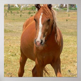 Impresión de un año del caballo de la castaña posters