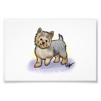 Impresión de Yorkshire Terrier Fotografías