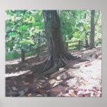 Impresión del árbol de haya posters