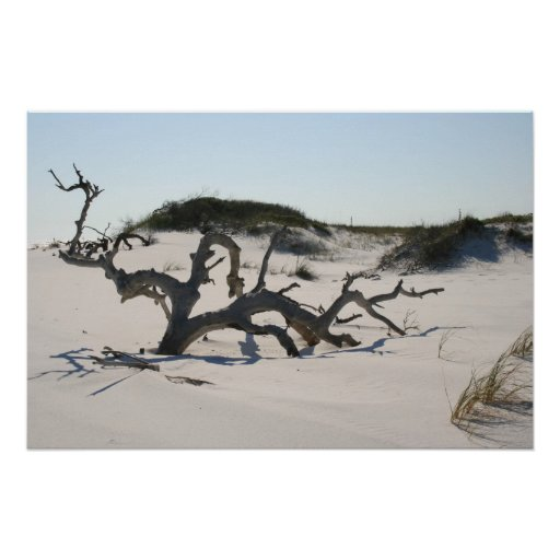 Impresión del árbol del paisaje de la duna de aren póster