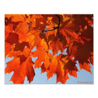 Impresión del arce del otoño fotografía