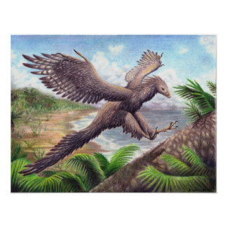 Impresión del Archaeopteryx Póster