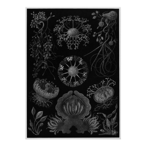 Impresión del arte de Ernst Haeckel: Ascomicetos Impresiones