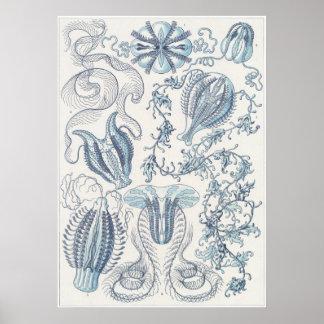 Impresión del arte de Ernst Haeckel: Ctenophorae Póster