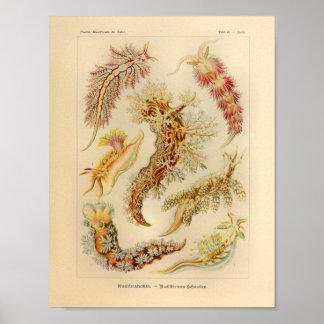 Impresión del arte de Ernst Haeckel del color del