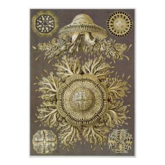 Impresión del arte de Ernst Haeckel: Discomedusae Póster