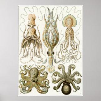 Impresión del arte de Ernst Haeckel: Gamochonia Posters