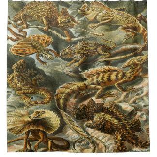 Impresión del arte de Ernst Haeckel: Lacertilia Cortina De Baño