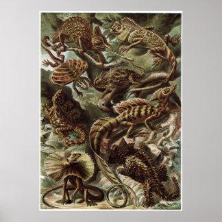 Impresión del arte de Ernst Haeckel: Lacertilia Impresiones