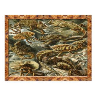 Impresión del arte de Ernst Haeckel: Lacertilia Tarjetas Postales