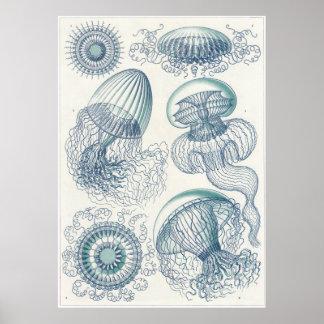 Impresión del arte de Ernst Haeckel: Leptomedusae Póster