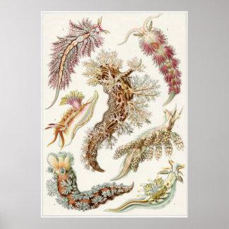 Impresión del arte de Ernst Haeckel: Nudibranchia Póster