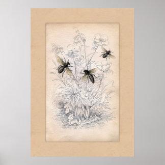 Impresión del arte de la abeja de la miel del vint póster