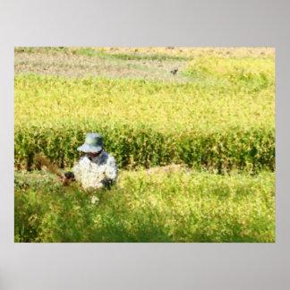 Impresión del arte de la cosecha del arroz posters