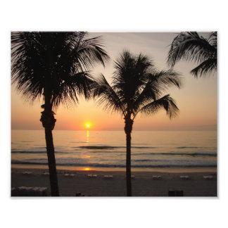 Impresión del arte de la fotografía de la palmera cojinete