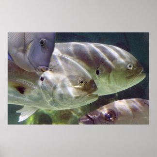 Impresión del arte de los pescados impresiones