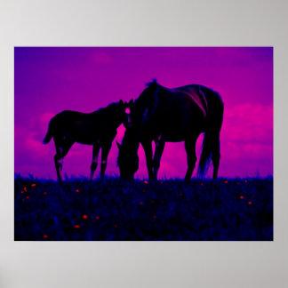 Impresión del arte del caballo y de la potra póster