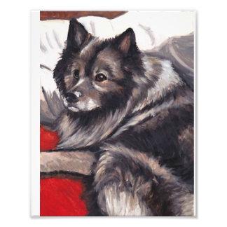Impresión del arte del perro del Keeshond Arte Fotografico