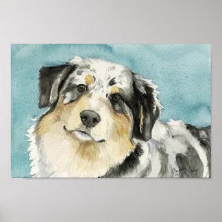 Impresión del arte del perro del pastor australia posters