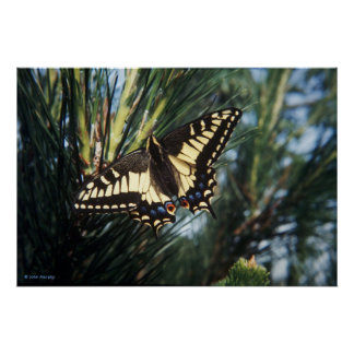 Impresión del arte/poster - mariposa en pino