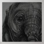 Impresión del bebé Elephant5 Posters