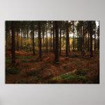 Impresión del bosque de Sherwood Posters