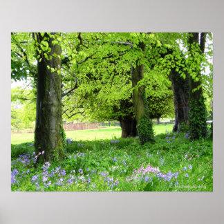 Impresión del bosque del Bluebell de la primavera Poster