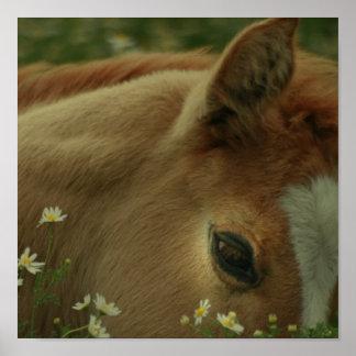 Impresión del caballo del bebé póster