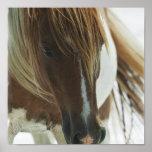 Impresión del caballo del mustango impresiones