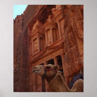 Impresión del camello del Petra Póster
