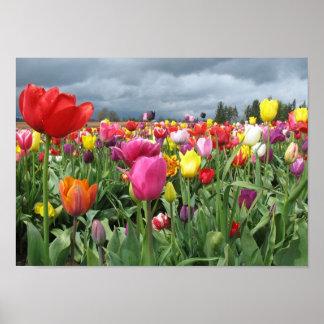 Impresión del campo de los tulipanes impresiones