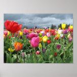 Impresión del campo de los tulipanes póster