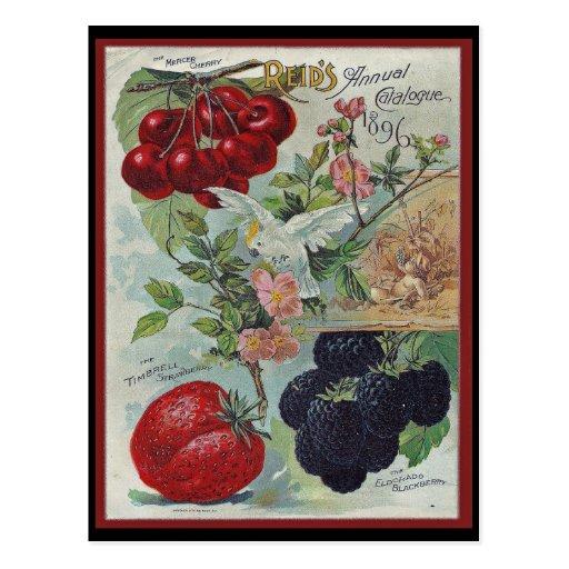 impresión del catálogo de semilla del vintage postal