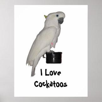 Impresión del Cockatoo Póster