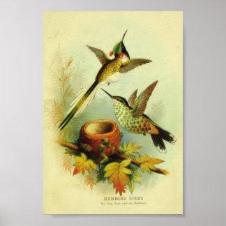 Impresión del colibrí del vintage póster